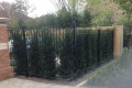 A domestic railing that covers several hedges